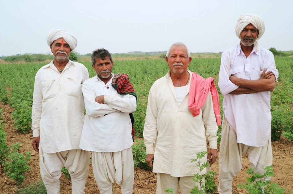 kala cotton farmers
